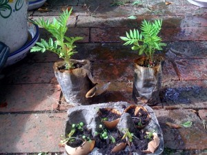 recycled seed pots